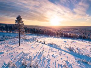 Schnee und gefrostete Wälder vor Sonnenaufgang