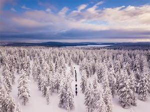 Wandernde im schneebedeckten Wald